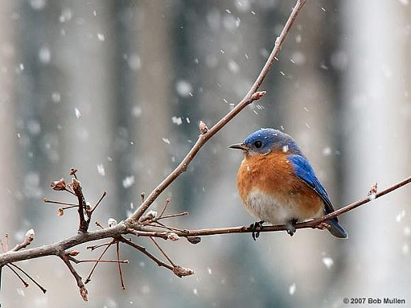 Colorful Bird in Winter