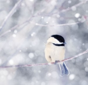 Cute-Bird-in-Winter