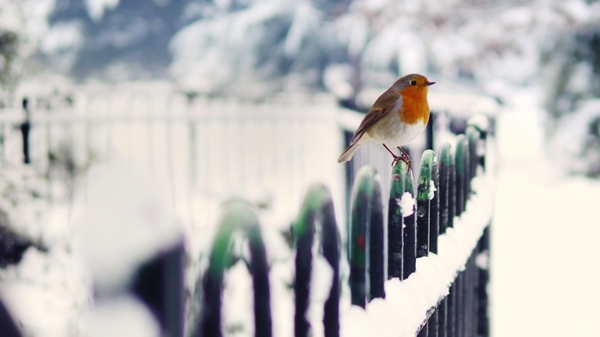 Cute-Winter-Snow-Bird