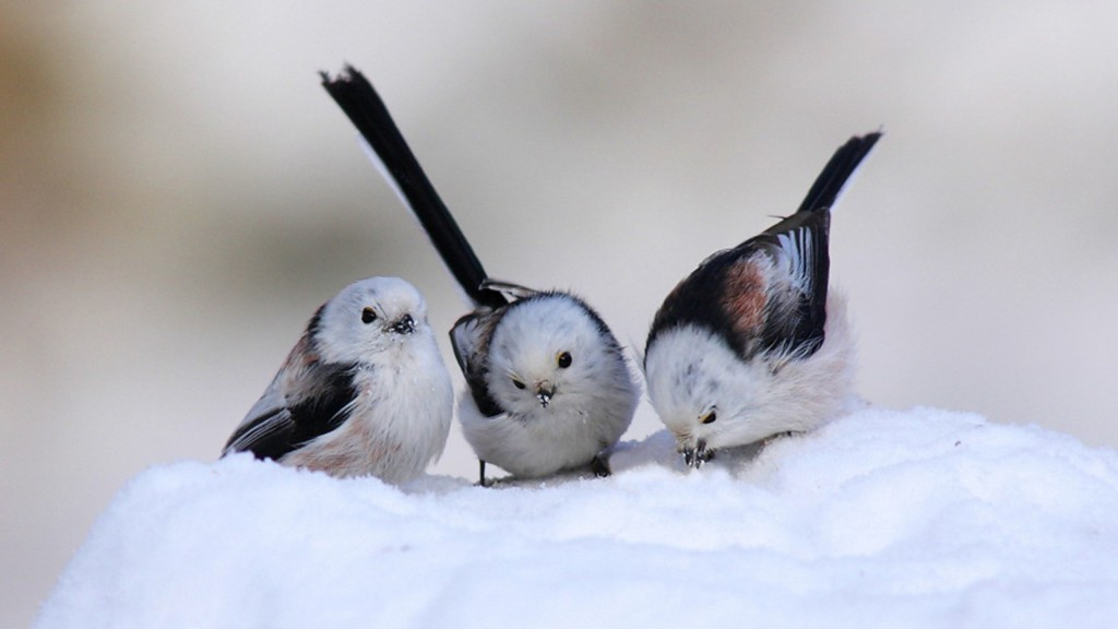 Birds are Beautiful in Winter