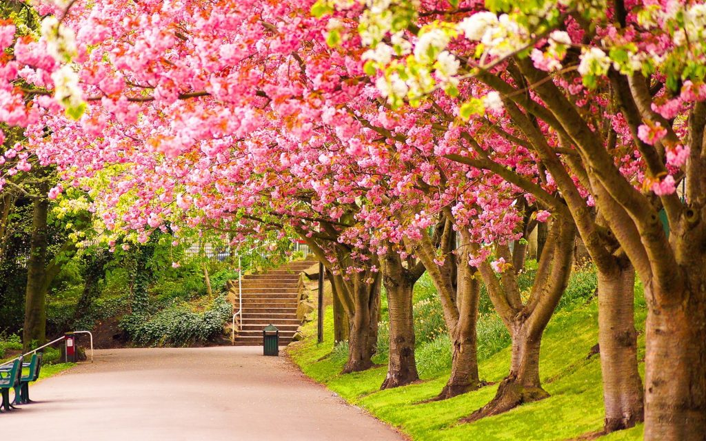 Beautiful Trees in Spring
