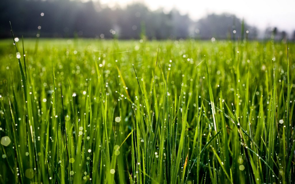 Grass in Spring Wallpaper