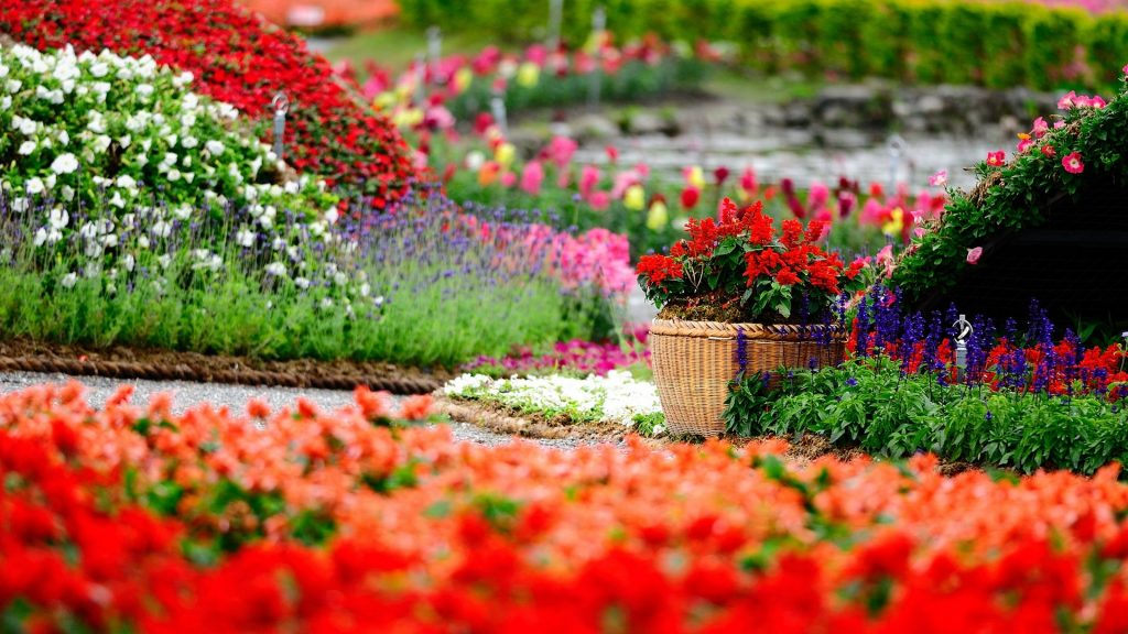 Colorful Flowers in Spring