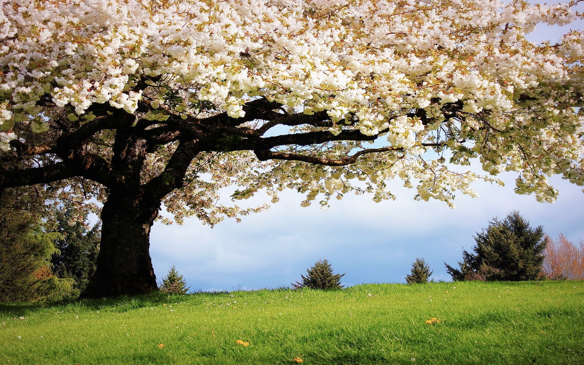 spring trees background - photo #6